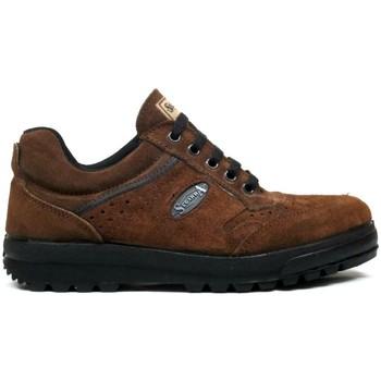 Zapatos Hombre Zapatillas bajas Segarra Zapatillas  3301 Marrón Marrón