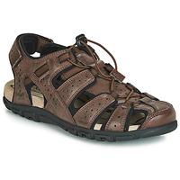 Zapatos Hombre Sandalias de deporte Geox UOMO SANDAL STRADA Marrón