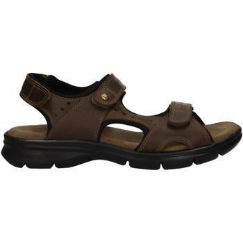Zapatos Hombre Sandalias Panama Jack SALTON C17 Verde