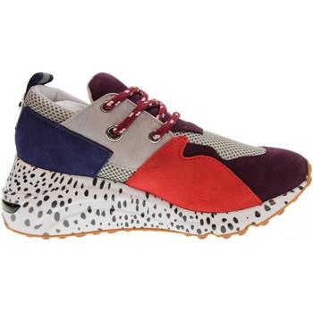 Zapatos Mujer Zapatillas bajas Steve Madden  Multicolor