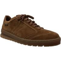 Zapatos Hombre Zapatillas bajas Mephisto Jumper Terciopelo marrón