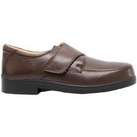 Zapatos Hombre Mocasín Roamers  Marrón