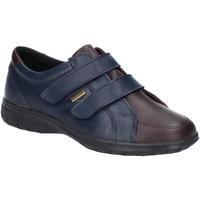 Zapatos Mujer Zapatillas bajas Cotswold  Marino/Marrón