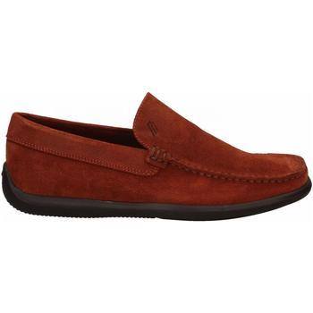 Zapatos Hombre Mocasín Frau CASTOROpunz rust