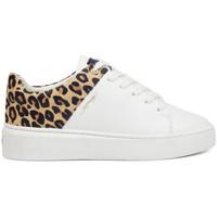 Zapatos Zapatillas bajas Ed Hardy Wild low top white leopard Blanco