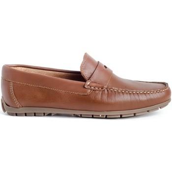 Zapatos Hombre Mocasín Myers 81365 (14.147) Marrón