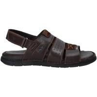 Zapatos Hombre Sandalias Valleverde 20831 Marrón