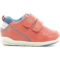 Zapatos Niños Zapatillas bajas Chicco 01056499000000 Rojo