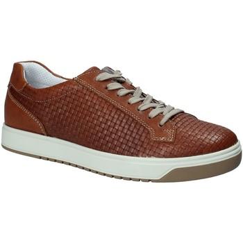 Zapatos Hombre Zapatillas bajas IgI&CO 1125 Marrón