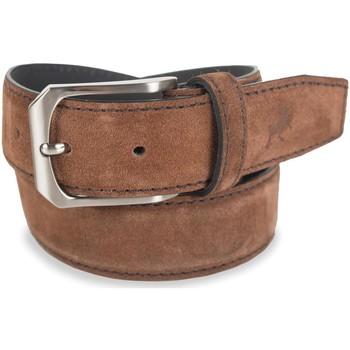 Accesorios textil Mujer Cinturones Lois Cinturón para mujer de Terciopelo de la firma Camel