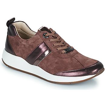 Zapatos Mujer Zapatillas bajas JB Martin KAP Polvo