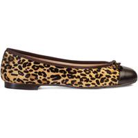 Zapatos Mujer Bailarinas-manoletinas Paco Gil ROSALIA Marrón