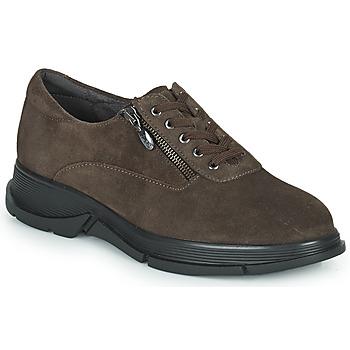Zapatos Mujer Zapatillas bajas Scholl BRISTOL ZIP Marrón
