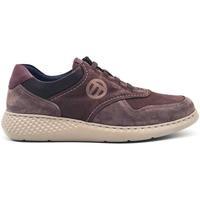 Zapatos Hombre Zapatillas bajas Notton 158 Marrón