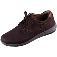 Zapatos Hombre Zapatillas bajas Josef Seibel Enrico 11 Marrón