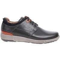 Zapatos Hombre Zapatillas bajas Josef Seibel 25313860101 Marrón