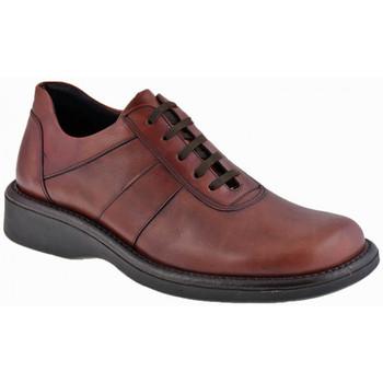 Zapatos Hombre Botas de caña baja Nicola Barbato  Violeta