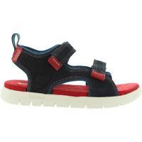 Zapatos Niños Sandalias Timberland A1LOF PIERMONT Azul