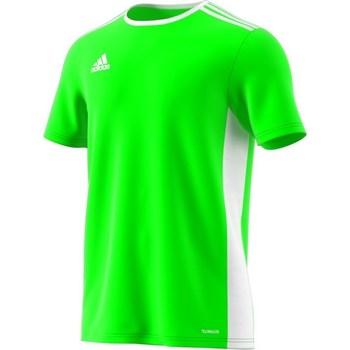 textil Hombre camisetas manga corta adidas Originals Entrada 18 Verde